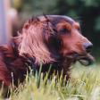 Profilbild von Penny