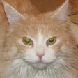 Profilbild von Picara