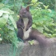 Profilbild von Squirrel