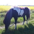 Profilbild von Ponybuchfee