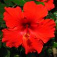 Profilbild von Callista