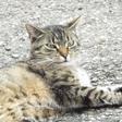 Profilbild von tigercat