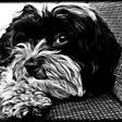 Profilbild von Amy-Maus87