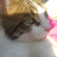 Profilbild von SmoNr1