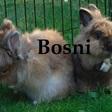 Profilbild von Bosni