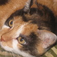 Profilbild von Katzenmicha