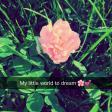Profilbild von My_little_world_to_dream