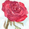 Profilbild von Dark_Rose
