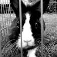 Profilbild von CassieBlatt