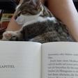 Profilbild von KittyCat