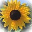 Profilbild von Filzblume