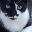 Profilbild von Lausie