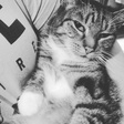 Profilbild von sabrina_sbs
