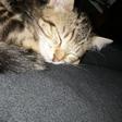 Profilbild von Wunderlandkatze