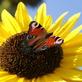 Profilbild von killerbiene75