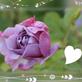 Profilbild von MissLila