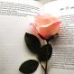 Profilbild von Lovely-bookish