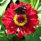 Profilbild von Stephie2309