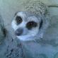 Profilbild von MelaM