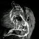 Profilbild von CallaHeart