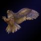 Profilbild von Dark-Owl