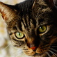 Profilbild von SunMell