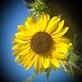 Profilbild von Sunshine81