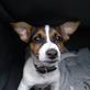 Profilbild von KleineLulu