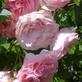 Profilbild von Tulpe2966