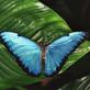 Profilbild von