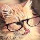 Profilbild von Sofa-Katze