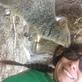 Profilbild von Sonea86