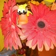 Profilbild von Motherduck