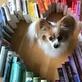 Profilbild von Lauras-bookshelf
