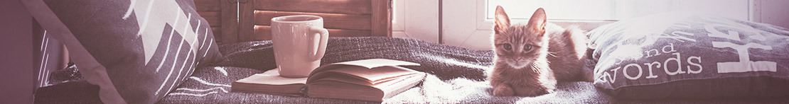 Gemütlich Lesen mit Tee und Katze