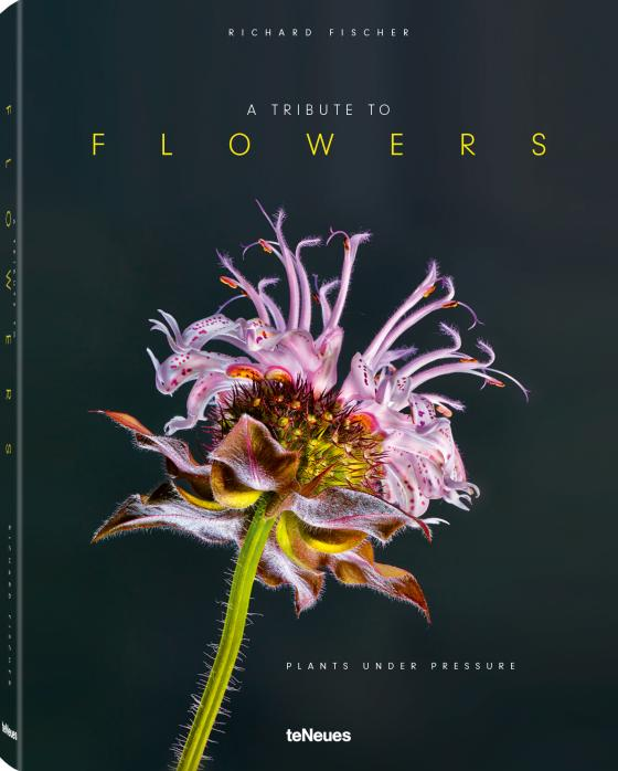 Cover-Bild A Tribute to FLOWERS, Hardcover version