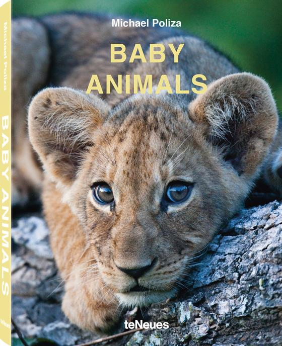 Cover-Bild Baby Animals
