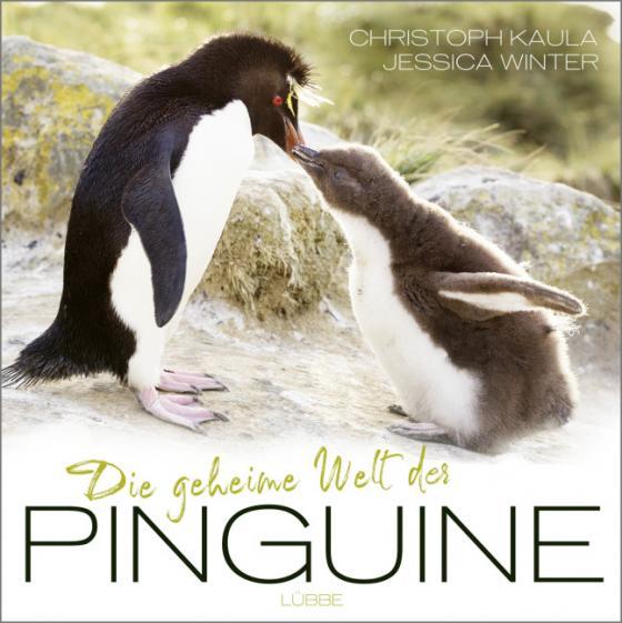 Cover-Bild Die geheime Welt der Pinguine