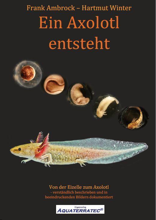 Cover-Bild Ein Axolotl entsteht