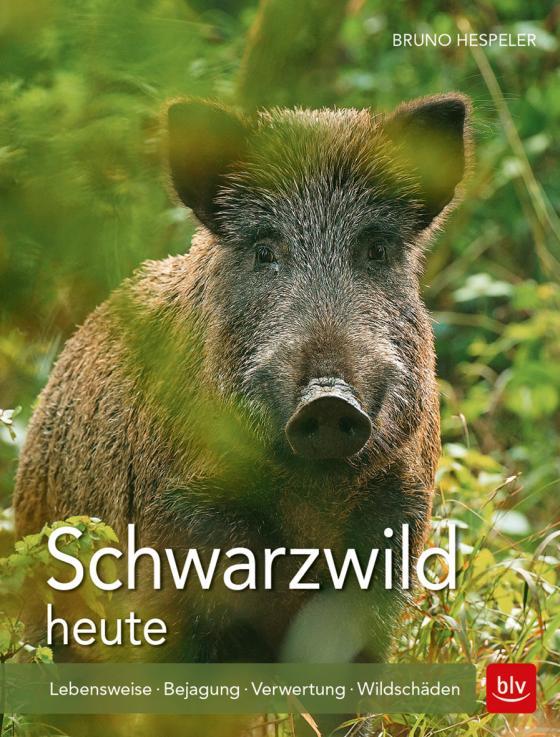 Cover-Bild Schwarzwild heute